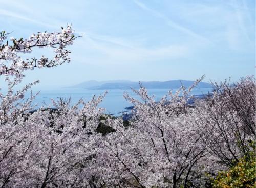 桜と青空と海